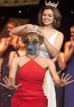 Scooby is crowned most beautiful dog