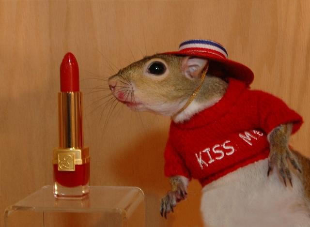 Lipstick on a squirrel