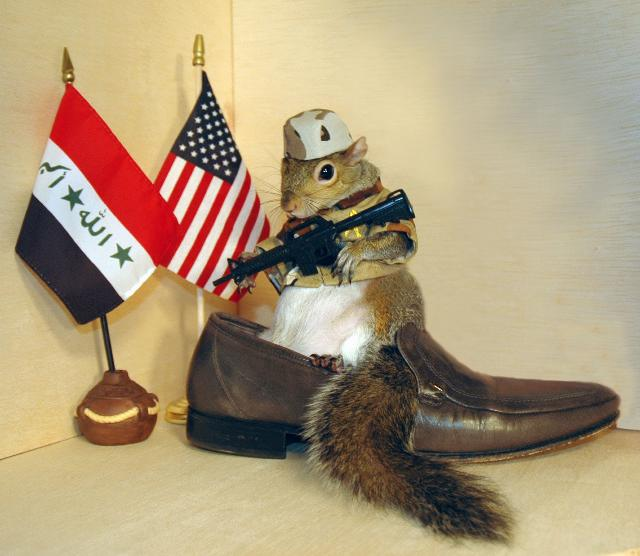 Sugar Bush Squirrel guards one of the shoes in Iraq
