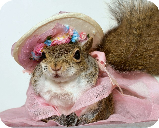 Flower Squirrel at the Royal Wedding