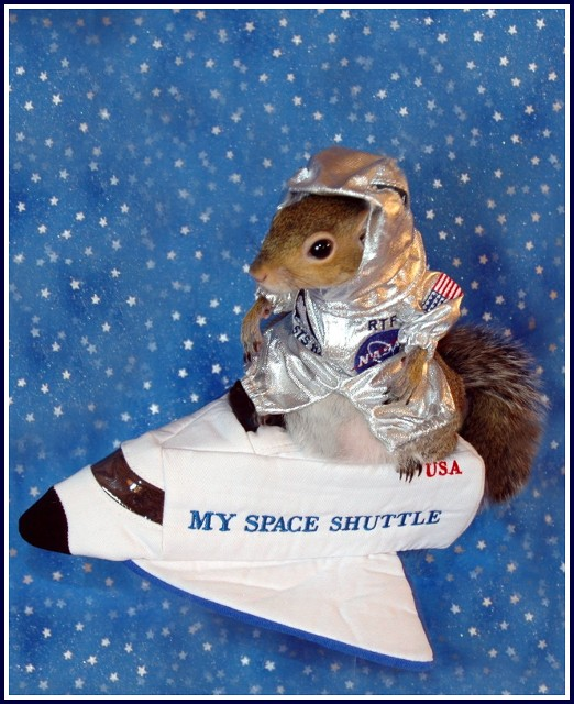 Sugar Bush Squirrel Shuttle Commander