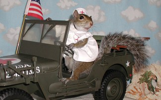 sugar bush squirrel red cross nurse in jeep overseas