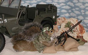 sugar bush squirrel says the machine gun's ready, sir