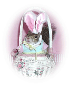 sugar bush squirrel Easter bunny in Easter basket