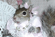 sugar bush squirrel pink valentine and pearl bracelet bling bling
