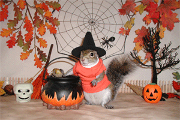 sugar bush squirrel stirring up trouble on halloween