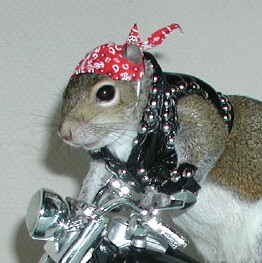 Sugar Bush as a Biker with stud vest & bandana