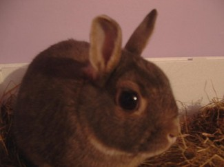 Sooty the Rabbit